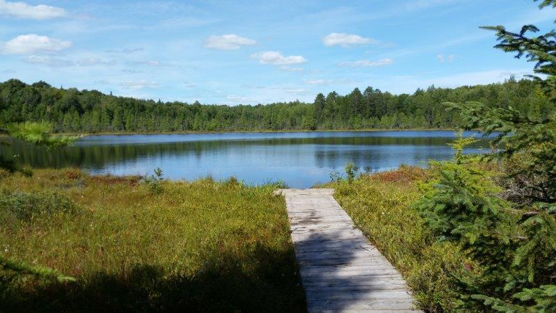 bog-lake